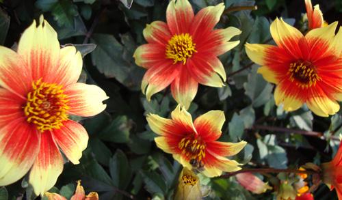 Fall-flowers-3