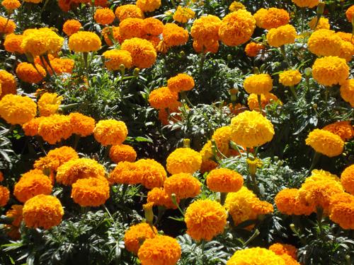 Fall-flowers-2