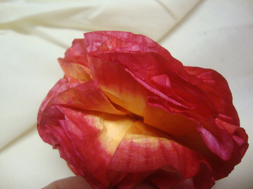 Red-orange-flower-inside