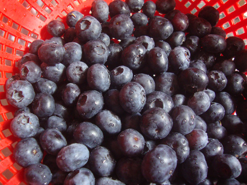 Washed-blueberries
